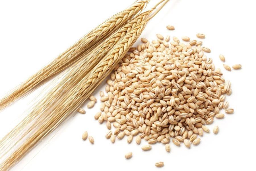 Những công dụng của mầm mạch, mầm lúa khiến bạn cũng phải bất ngờ