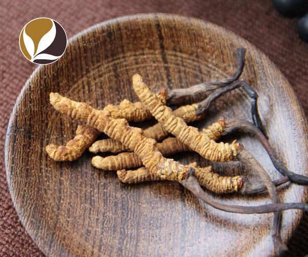 Đông trùng hạ thảo Tây Tạng khô nguyên con