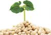 Sử dụng mầm đậu nành như thế nào là đúng cách?