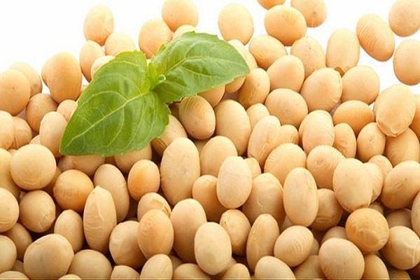 Tác dụng vượt trội của bột mầm đậu nành fami