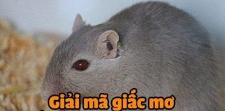 Giải mã giấc mơ thấy chuột đánh con gì?
