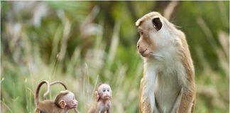 Mơ thấy khỉ thường là điềm báo không may mắn trong cuộc sống